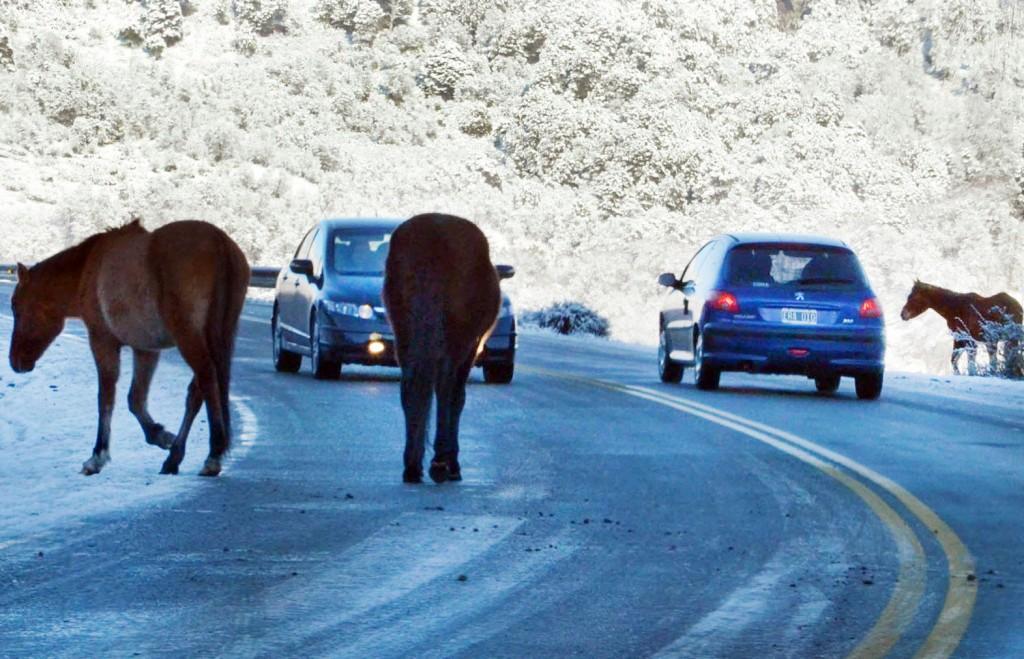 camino de los siete lagos caballos