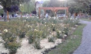 centenario la ciudad de las rosas