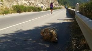 piedra con chica corriendo