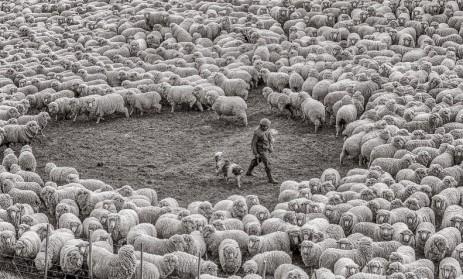eliseo ovejas 1