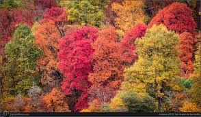 arboles otoño