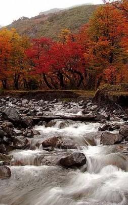 arroyo otoño